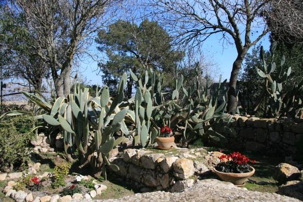 Transfig garden